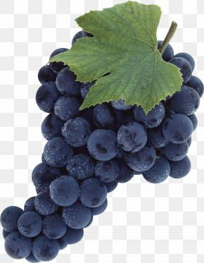 Grape Image - Common Grape Vine PNG
