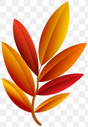 Autumn Leaf Image - Image File Formats Lossless Compression PNG