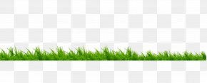 Grass - Lawn Meadow Brand Green PNG