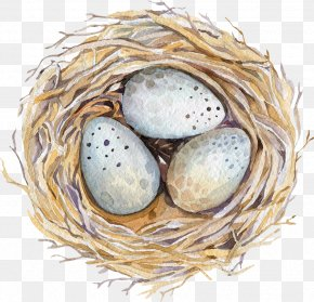 Nest - Watercolor Painting Drawing Stock Photography Illustration PNG