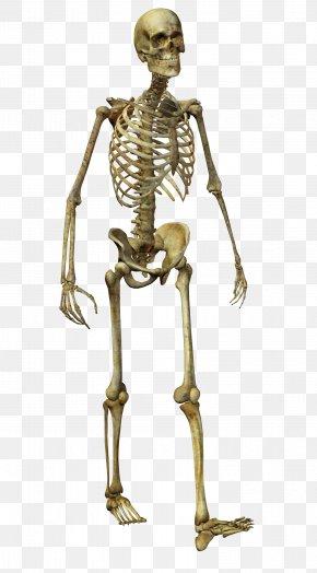 Horror Skull - Human Skeleton Homo Sapiens Bone PNG