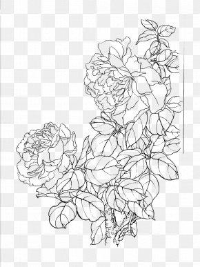 Flower Artwork - Drawing Rosa Chinensis Gongbi Moutan Peony PNG