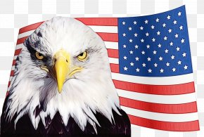 Falconiformes Flag Day Usa - Veterans Day Usa Flag PNG