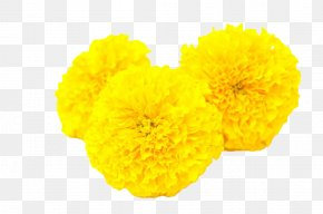 Yellow Marigold - Calendula Officinalis Mexican Marigold Flower Yellow Toran PNG