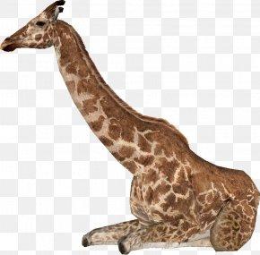 Giraffa - Zoo Tycoon 2: Extinct Animals Giraffa Jumae Northern Giraffe Even-toed Ungulates Giraffa Sivalensis PNG