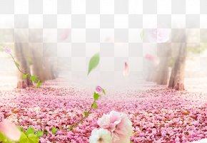 Cherry Blossom Road - Cherry Blossom Flower PNG