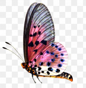 Format Images Of Butterfly - Butterfly Image Editing PicsArt Photo Studio PNG