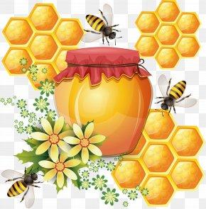 Bee - Western Honey Bee Honeycomb Beehive Vector Graphics PNG