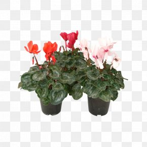 Flower - Cyclamen Flowerpot Houseplant Artificial Flower PNG