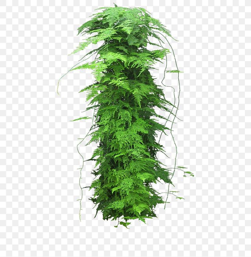 Houseplant Dragon Tree Bonsai Png 500x841px Plant Arecaceae Bonsai Chimonanthus Praecox Dracaena Download Free