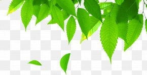 Leaves - Herbicide Insect Repellent Aerosol Spray Silicone PNG