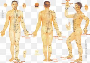 Point Table - Acupuncture Meridian Traditional Chinese Medicine Therapy Moxibustion PNG