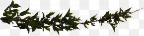 Branch Hd - Branch Clip Art PNG