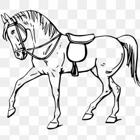 Animal Outline - Tennessee Walking Horse Drawing Show Jumping Clip Art PNG