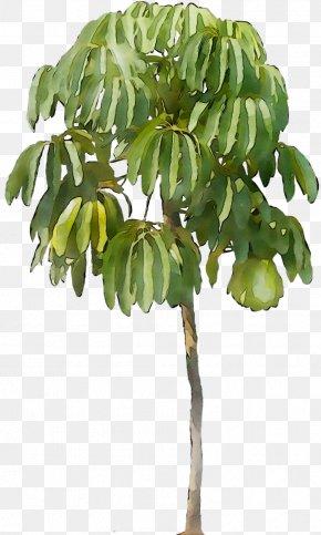 Flowerpot Leaf Houseplant Plant Stem Plants PNG