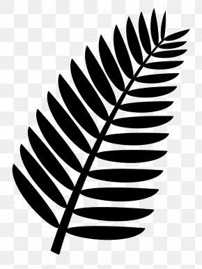 Leaf - Palm Branch Arecaceae Frond Clip Art PNG