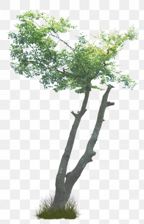 Tree - What Are Trees? Shrub Branch Plant PNG