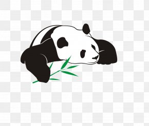 Panda Eating Bamboo - Giant Panda Bear Illustration PNG
