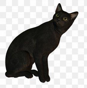 Black Cat - Korat Bombay Cat Russian Blue European Shorthair German Rex PNG