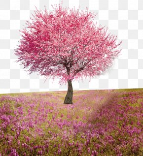 Peach Tree - Flower Tree Computer File PNG