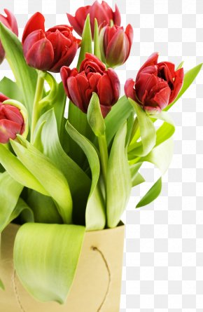 Tulip - Desktop Wallpaper High-definition Video Flower 1080p Display Resolution PNG