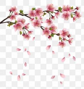 Cherry Blossom - Flower Spring Clip Art PNG