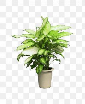 Alice Queen Pot - Flowerpot Houseplant Clip Art PNG