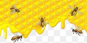Bee - Bee Torte Honeycomb Clip Art PNG