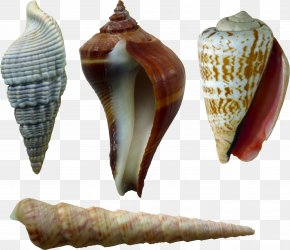 Seashell - Image File Formats Lossless Compression PNG