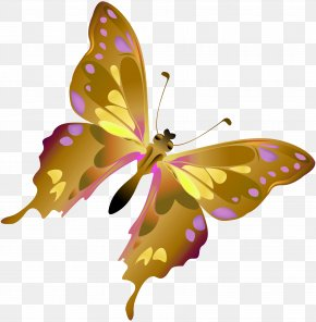 Butterfly - Butterfly Insect Dragonfly Moth Clip Art PNG