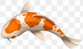 White And Orange Koi Fish Transparent Clip Art Image - Koi Showa Goldfish Clip Art PNG
