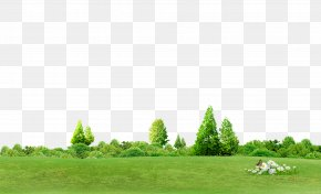 Trees Background - Chroma Key Tree Computer File PNG
