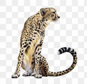 Cheetah Transparent - Cheetah Lion Felidae PNG