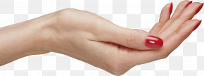 Palm Hands Hand Image - Hand Arm PNG