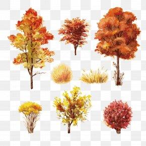 Autumn Trees - Shrub Autumn Leaf Color Tree PNG