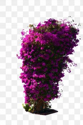 Tree Top - Shrub Flower Violet DeviantArt PNG