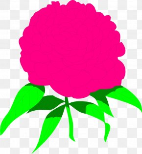 Peony Cliparts Free - Peony Watercolor Painting Pink Flowers Drawing Clip Art PNG