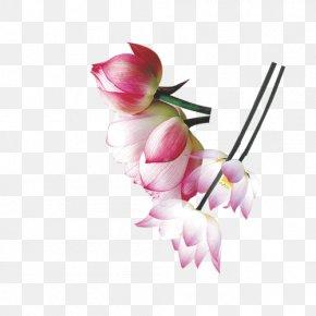 Mid-HD Multi-layer Material,Lotus - Floral Design Nelumbo Nucifera Wallpaper PNG