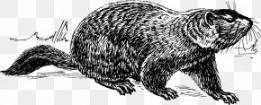 Groundhog Day The Groundhog Clip Art PNG