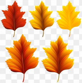 Beautiful Fall Leaves Set Clipart Image - Autumn Leaf Color Clip Art PNG