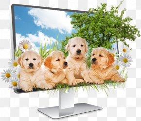 Cute Dog - Golden Retriever Puppy Dog Breed Companion Dog PNG