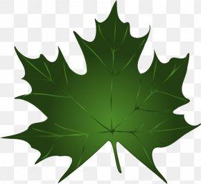 Maple Leaf Vector Free Download - Green Maple Leaf Clip Art PNG