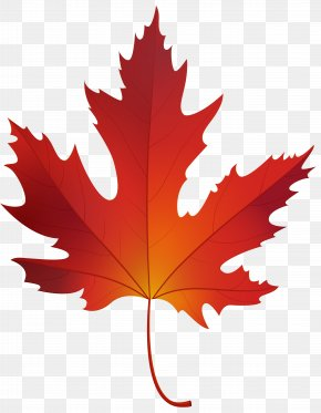 Maple Leaf - Red Maple Sugar Maple Maple Leaf Clip Art PNG