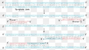 Amplify - Polymerase Chain Reaction DNA Replication Transcription PNG