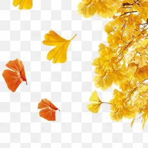 Autumn Leaves - Autumn Poster Sales Promotion PNG