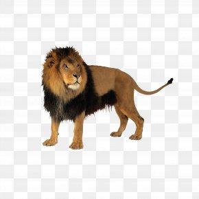 Lion - Lion Cat Tiger Clip Art PNG