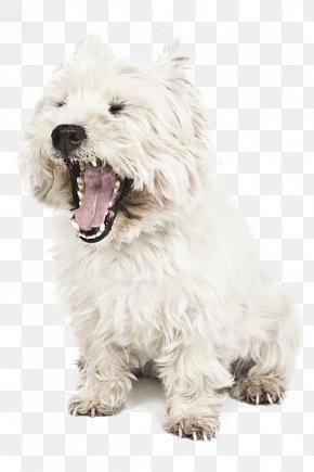 West Highland White Terrier Glen Of Imaal Terrier Cairn Terrier Dutch Smoushond Maltese Dog PNG