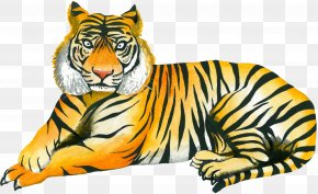 Yellow Tiger - Tiger Cat Whiskers Wildlife Illustration PNG