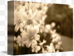 Botanical Garden - Desktop Wallpaper Lilac Black Computer PNG