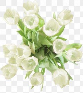 Flower - Garden Roses Carnation Flower White PNG